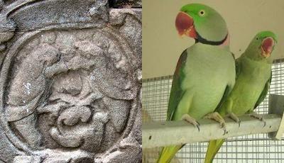 camboja-papagaios