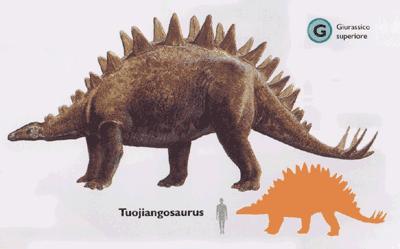 Tuojiangosaurus - um dos estegossauirídeos asiáticos